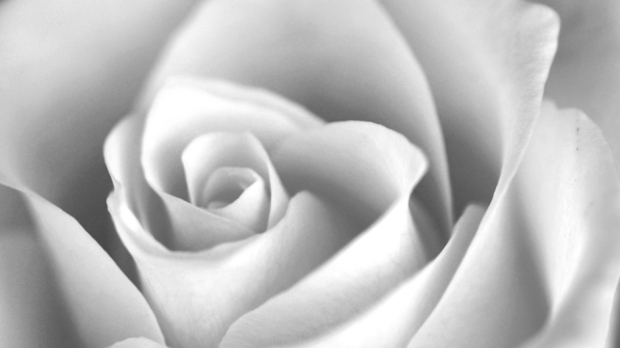 Flower 6 featured